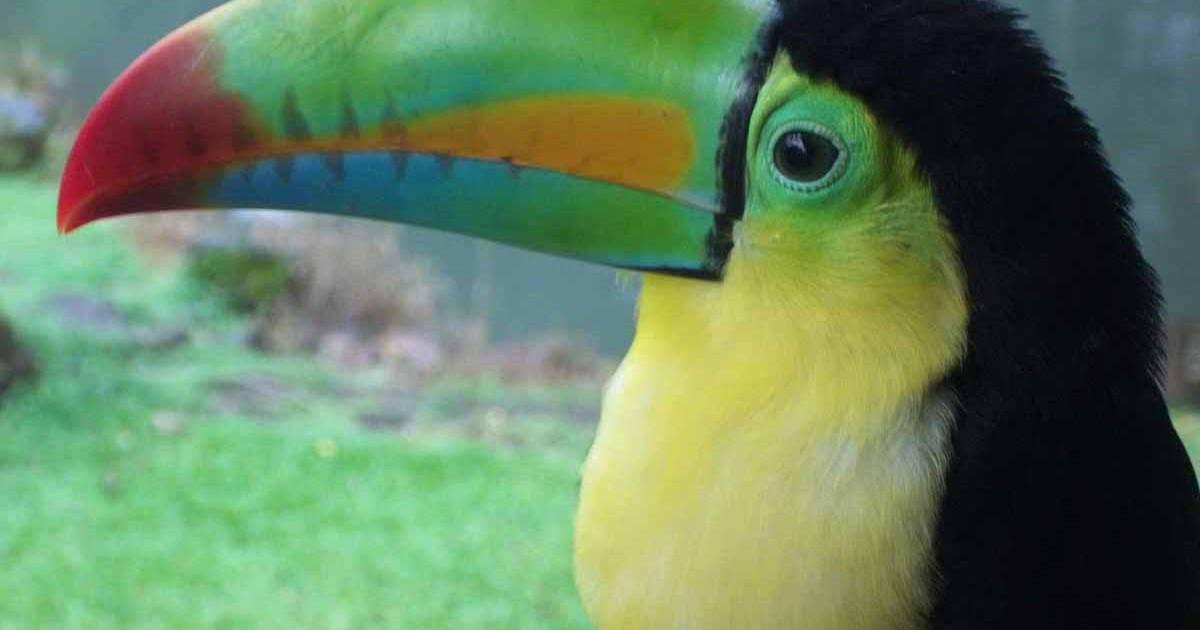 wildlife at hotel villas rio mar